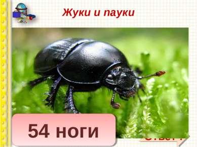 Жуки и пауки Вопрос: сколько ног у жука? Сколько ног у паука? У меня в одной ...