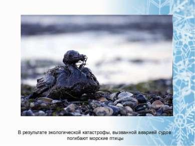В результате экологической катастрофы, вызванной аварией судов погибают морск...
