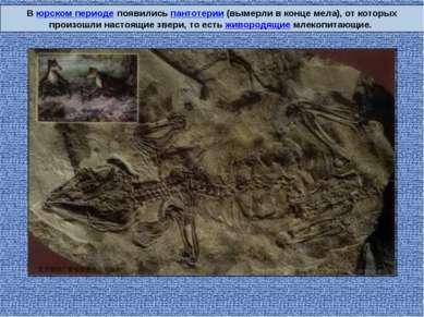 В юрском периоде появились пантотерии (вымерли в конце мела), от которых прои...
