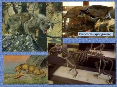 Creodonta (креодонты)