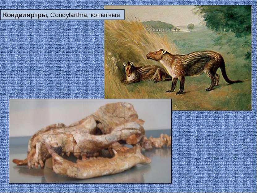 Кондиляртры, Condylarthra, копытные