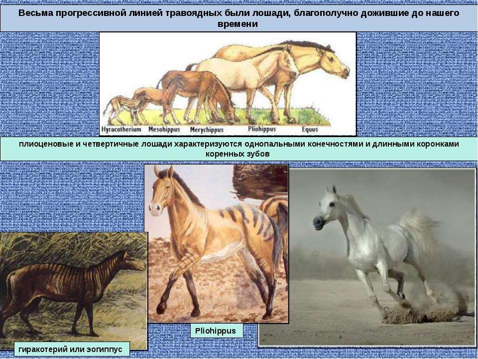 Весьма прогрессивной линией травоядных были лошади, благополучно дожившие до ...