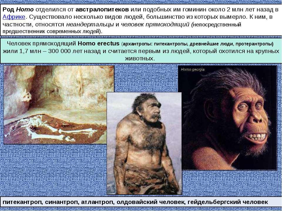 Род Homo отделился от австралопитеков или подобных им гоминин около 2млн лет...