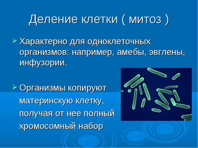 Деление клетки ( митоз ) Характерно для одноклеточных организмов: например, а...