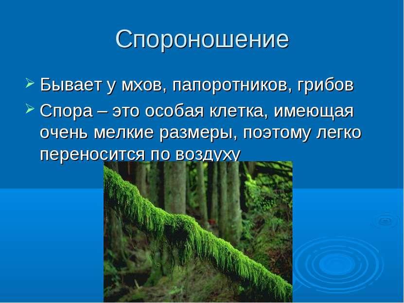 Спороношение Бывает у мхов, папоротников, грибов Спора – это особая клетка, и...