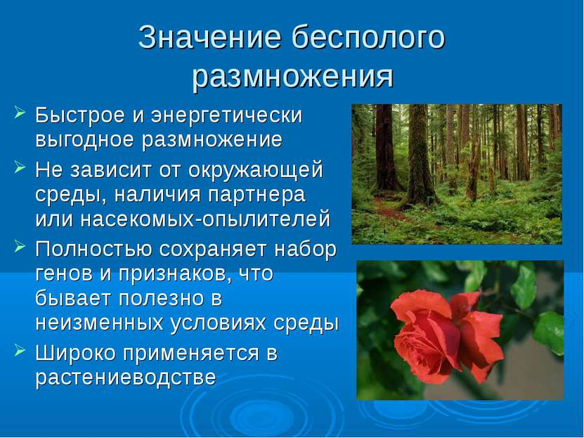 Значение бесполого размножения Быстрое и энергетически выгодное размножение Н...