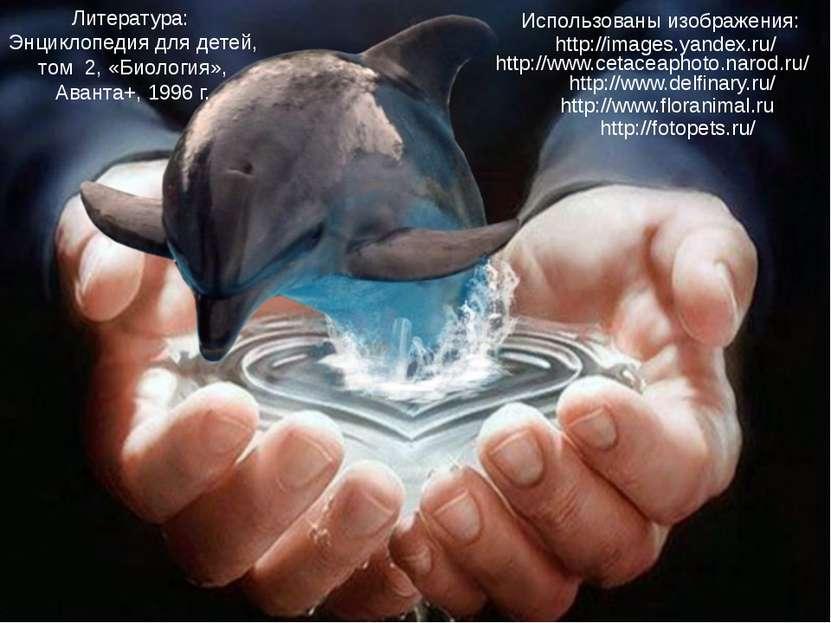 Использованы изображения: http://www.delfinary.ru/ http://www.cetaceaphoto.na...