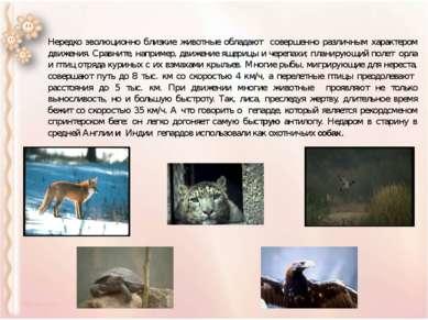 Нередко эволюционно близкие животные обладают совершенно различным характером...