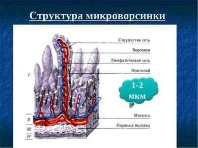 Структура микроворсинки
