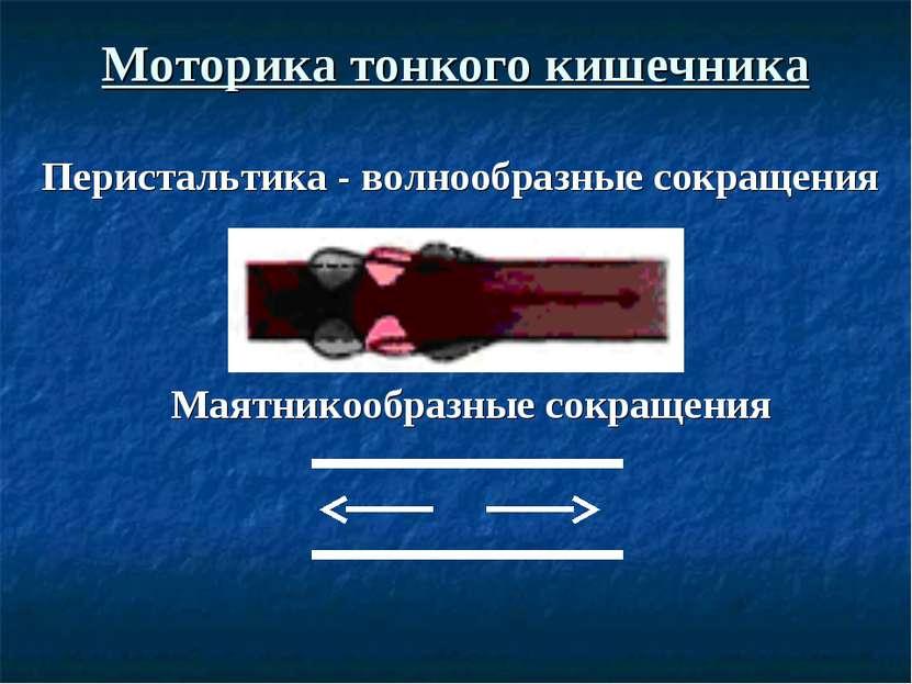 Моторика тонкого кишечника Перистальтика - волнообразные сокращения Маятникоо...