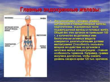 Главные эндокринные железы: Это гипоталамус, гипофиз, эпифиз, щитовидная и па...