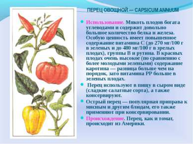 ПЕРЕЦ ОВОЩНОЙ — CAPSICUM ANNUUM Использование. Мякоть плодов богата углеводам...