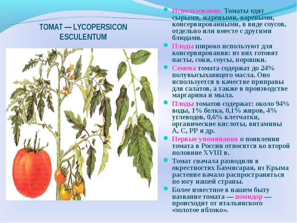 ТОМАТ — LYCOPERSICON ESCULENTUM Использование. Томаты едят сырыми, жареными, ...