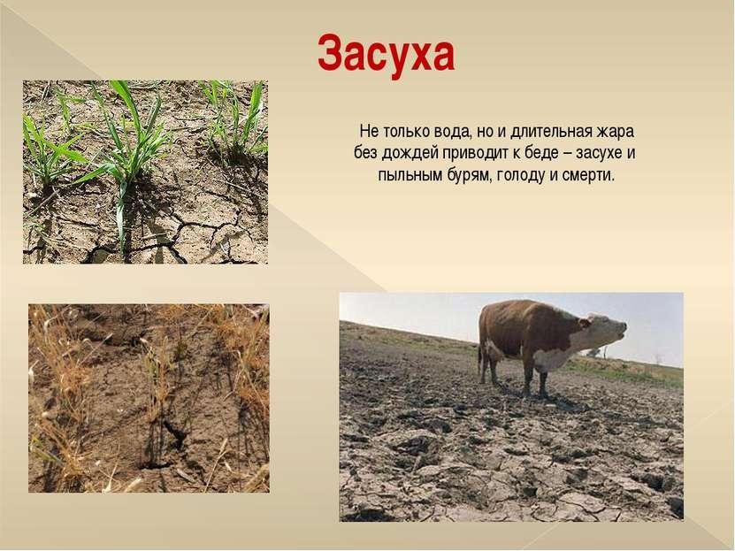 Засуха Не только вода, но и длительная жара без дождей приводит к беде – засу...