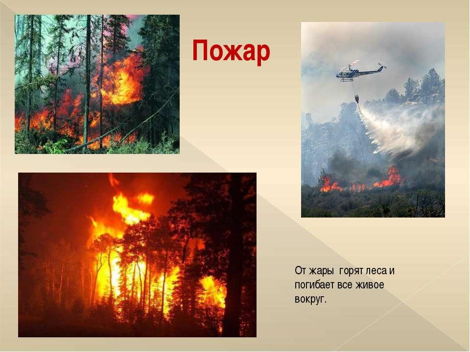 Пожар От жары горят леса и погибает все живое вокруг.