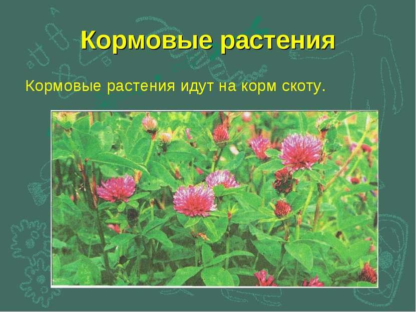 Кормовые растения Кормовые растения идут на корм скоту.