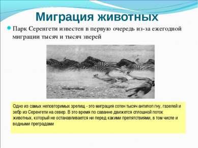 Миграция животных Парк Серенгети известен в первую очередь из-за ежегодной ми...