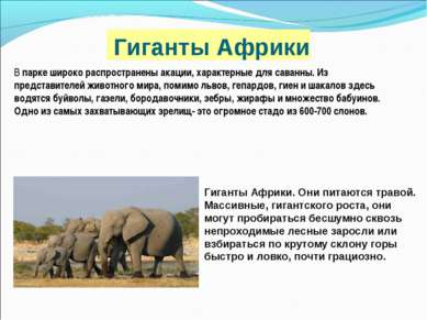 Гиганты Африки В парке широко распространены акации, характерные для саванны....