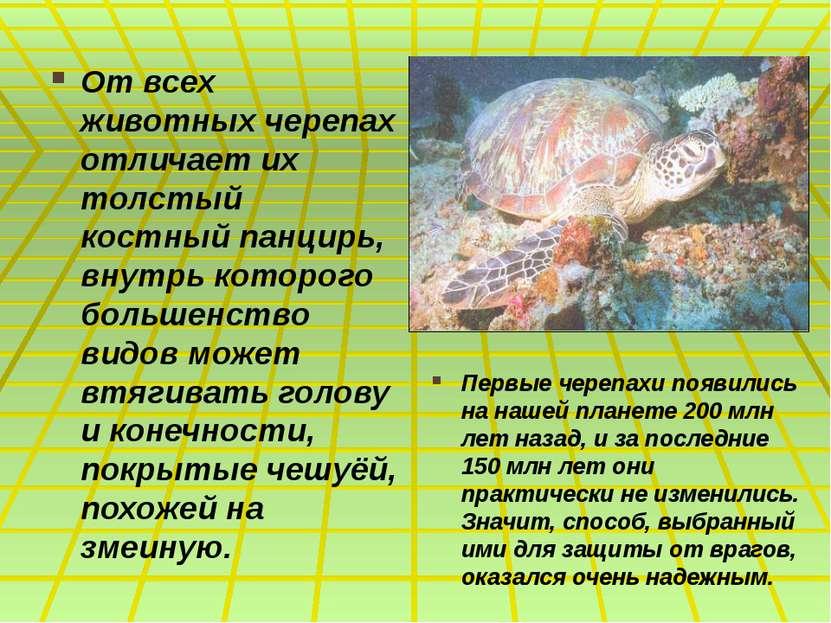 От всех животных черепах отличает их толстый костный панцирь, внутрь которого...