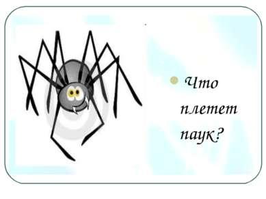 Что плетет паук?