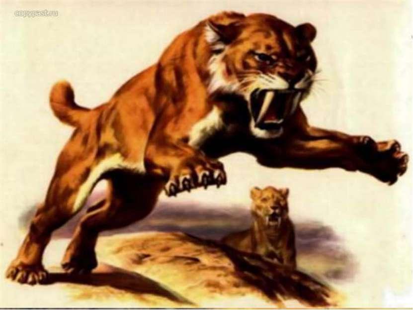 Бросив тушу, львица скроется в степи. Вот еще один способ древнейшей охоты. П...