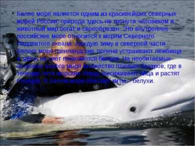 Белое море является одним из красивейших северных морей России, природа здесь...
