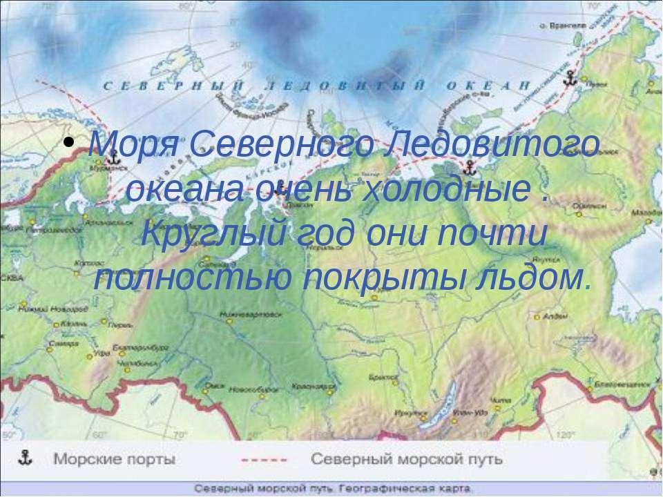 Моря Северного Ледовитого океана очень холодные . Круглый год они почти полно...