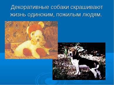 Декоративные собаки скрашивают жизнь одиноким, пожилым людям.
