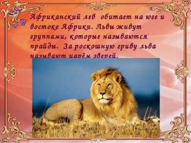 Африканский лев обитает на юге и востоке Африки. Львы живут группами, которые...