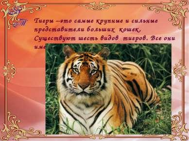 Тигры –это самые крупные и сильные представители больших кошек. Существуют ше...