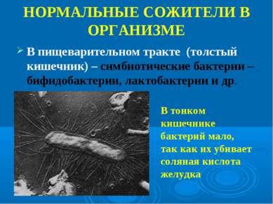В пищеварительном тракте (толстый кишечник) – симбиотические бактерии – бифид...