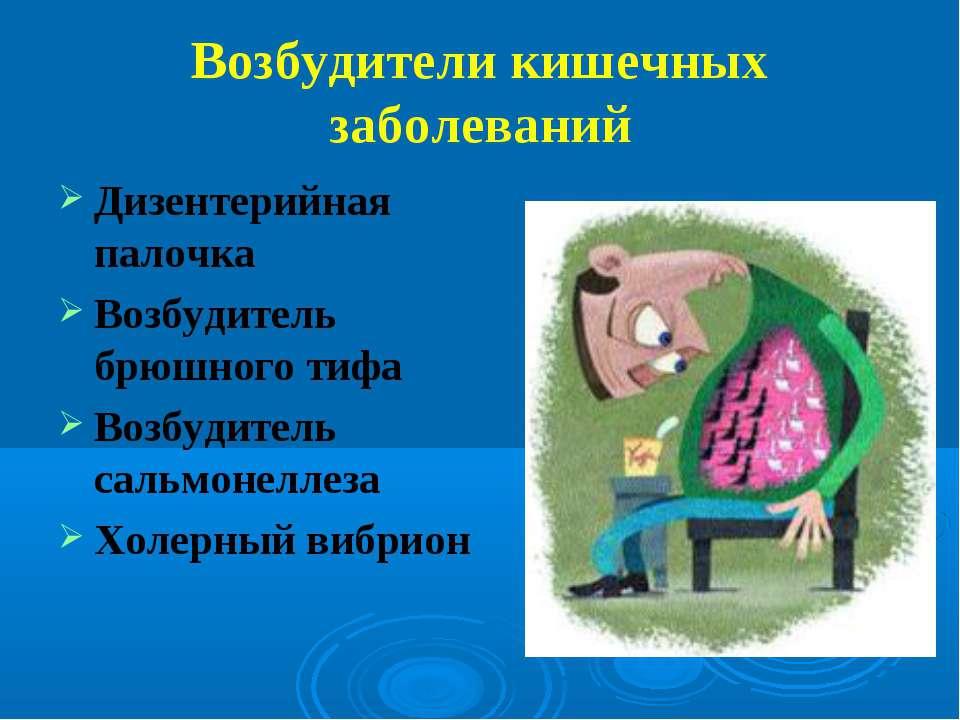 Возбудители кишечных заболеваний Дизентерийная палочка Возбудитель брюшного т...
