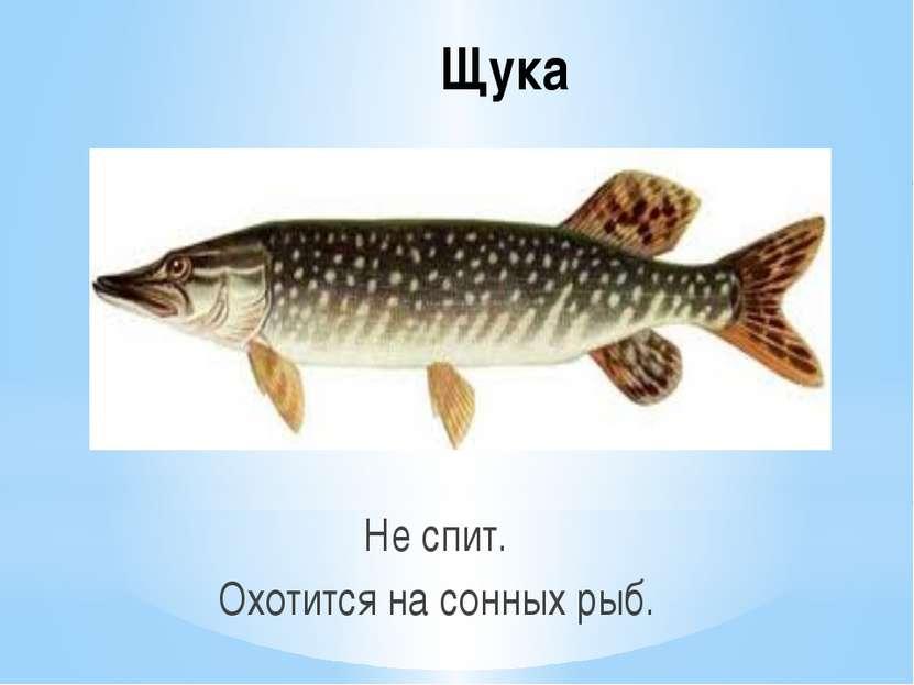 Щука Не спит. Охотится на сонных рыб.