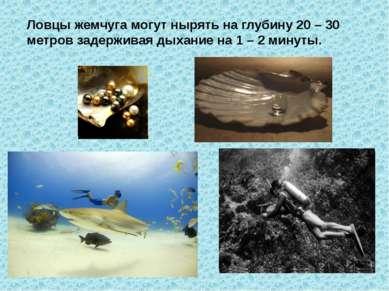 Ловцы жемчуга могут нырять на глубину 20 – 30 метров задерживая дыхание на 1 ...