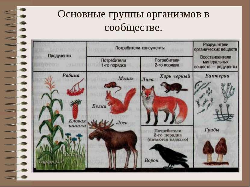 Основные группы организмов в сообществе.