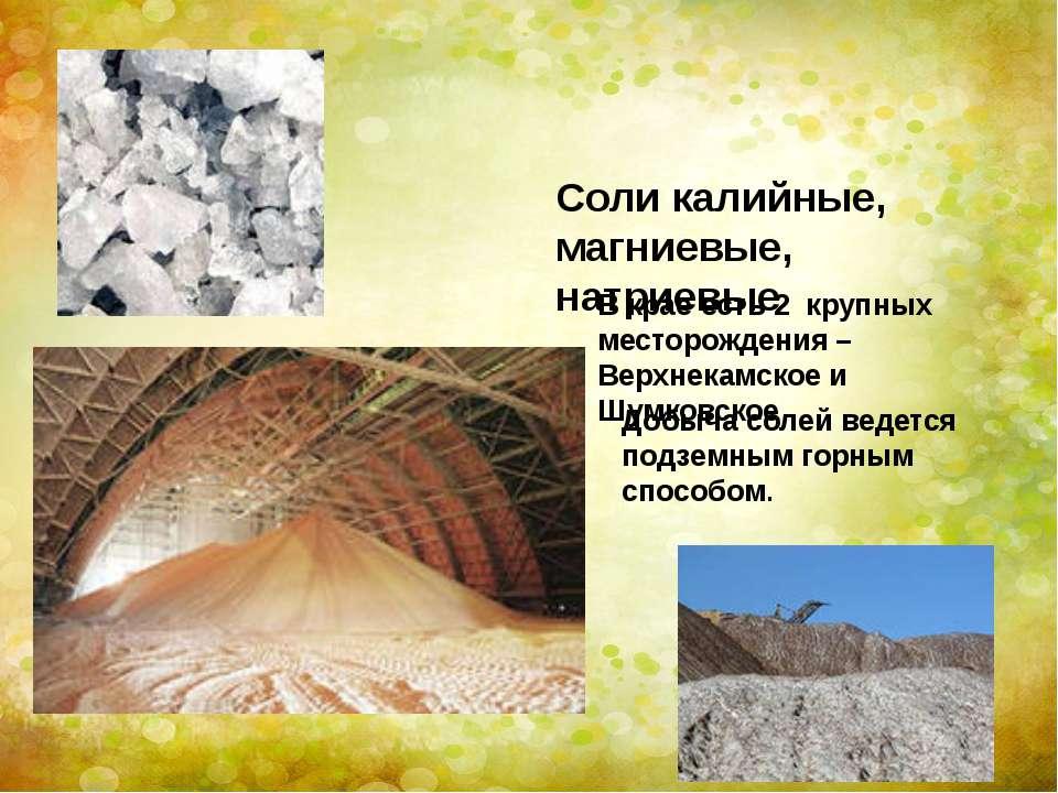 Соли калийные, магниевые, натриевые В крае есть 2 крупных месторождения – Вер...