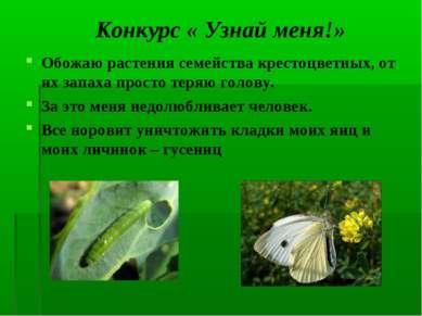 Конкурс « Узнай меня!» Обожаю растения семейства крестоцветных, от их запаха ...