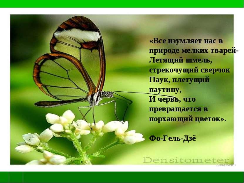 «Все изумляет нас в природе мелких тварей- Летящий шмель, стрекочущий сверчок...
