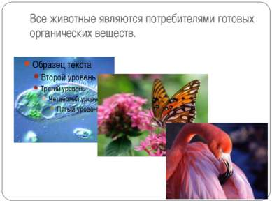 Все животные являются потребителями готовых органических веществ.