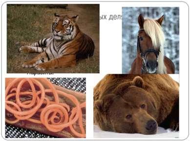 По способу питания животных делят на: Травоядные Хищные (плотоядные) Всеядные...