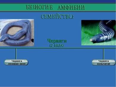 Червяга ленивая змея Червяга кольчатая