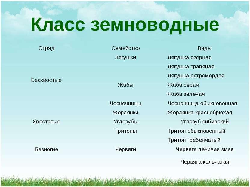 Класс земноводные