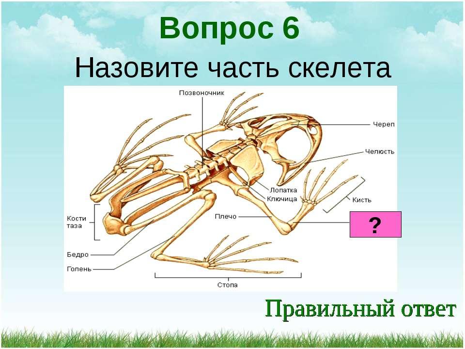 Назовите часть скелета Вопрос 6 ?