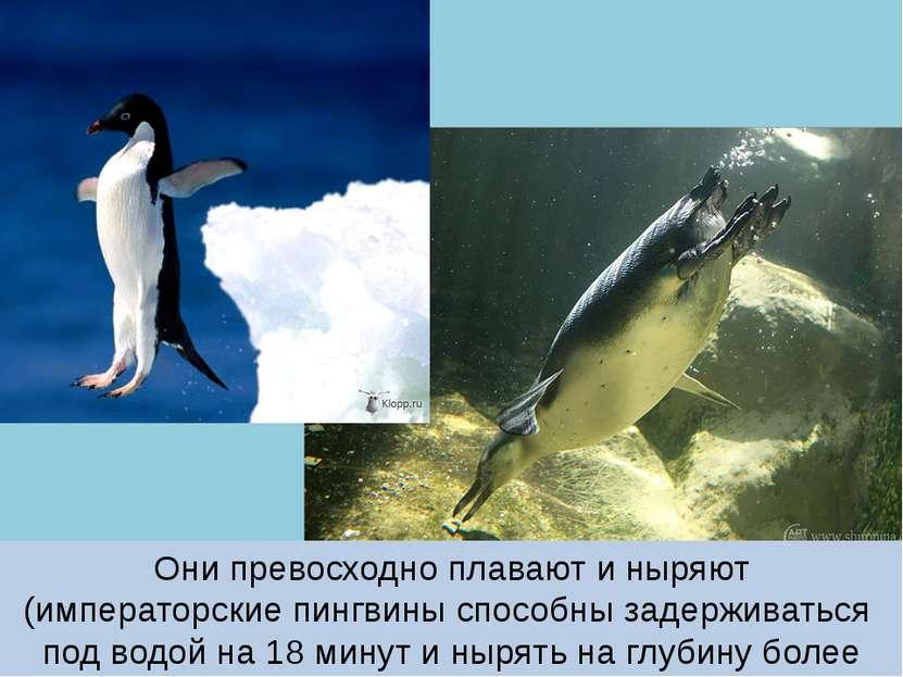 Они превосходно плавают и ныряют (императорские пингвины способны задерживать...