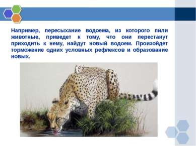 Например, пересыхание водоема, из которого пили животные, приведет к тому, чт...