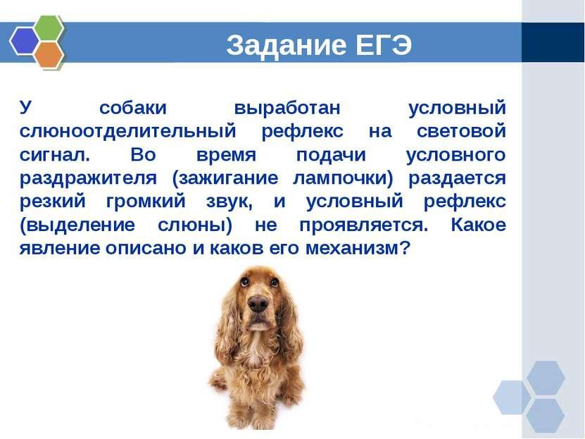 У собаки выработан условный слюноотделительный рефлекс на световой сигнал. Во...