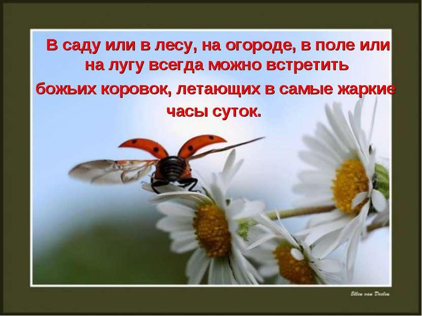В саду или в лесу, на огороде, в поле или на лугу всегда можно встретить божь...