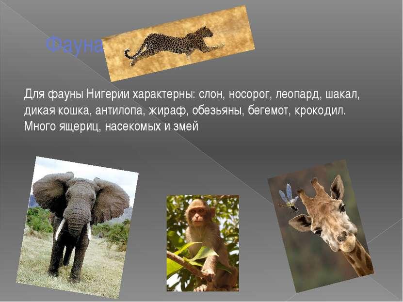 Фауна Для фауны Нигерии характерны: слон, носорог, леопард, шакал, дикая кошк...