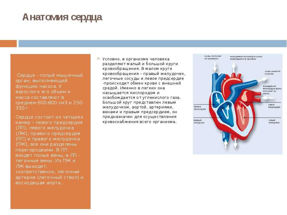 Анатомия сердца Сердце - полый мышечный орган, выполняющий функцию насоса. У...