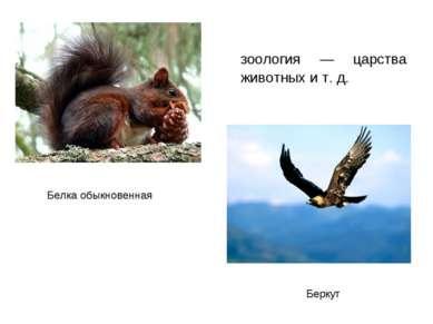 зоология — царства животных и т. д. Белка обыкновенная Беркут